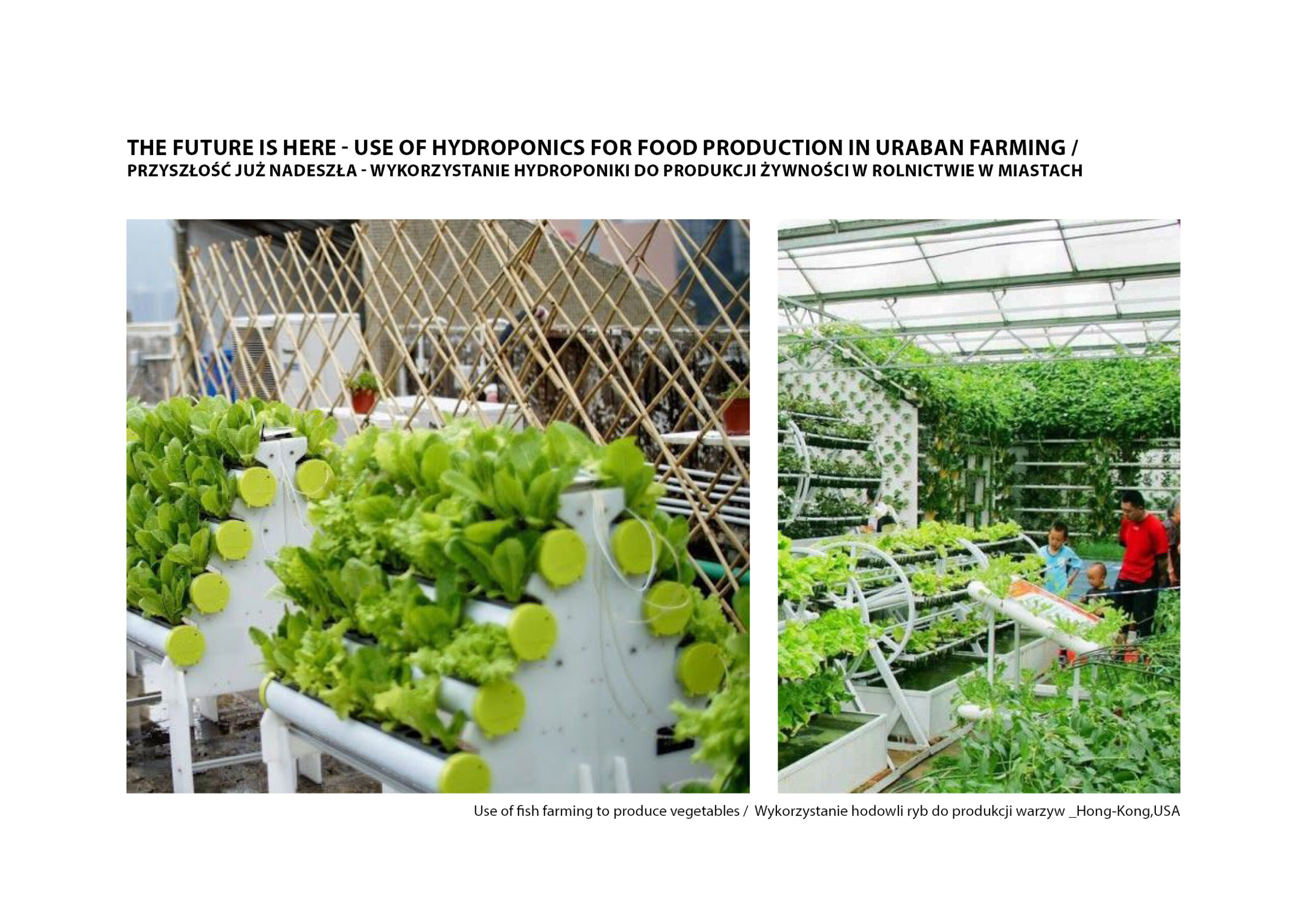MJZ-Urban-Farming-XXI-Ogrody-Dzialkowe-Przyszlosci17-1
